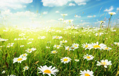אביב הגיע …פסח בא…