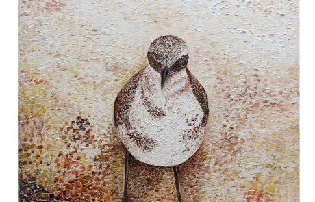 """ד""""ר יחיאל שקד, רופא משפחה  מצייר בעלי חיים נדירים באיי הגלפאגוס"""