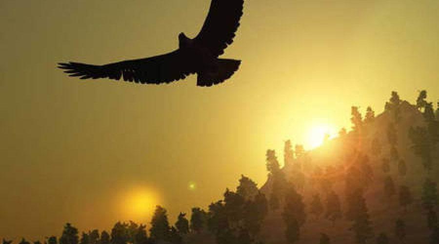 ציפור במעוף על רקע שקיעה