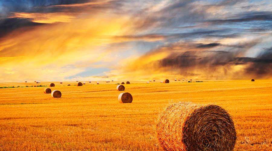 שדה עם גלגלי חציר