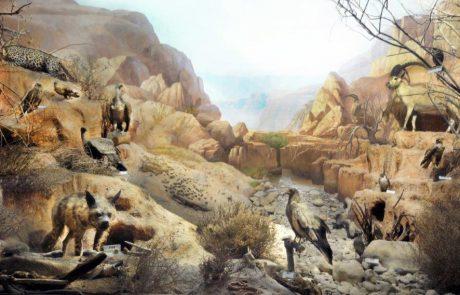 מוזיאון האדם והחי בפארק הלאומי ברמת-גן משתתף בשבוע החינוך המדעי 02-09.04.16
