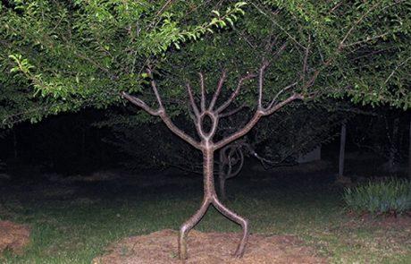 """צמיחה ושורשים בט""""ו בשבט"""