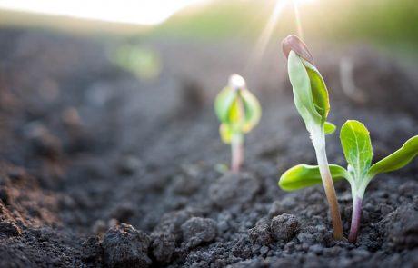 הצמיחה, הפריחה, והעצמה אישית