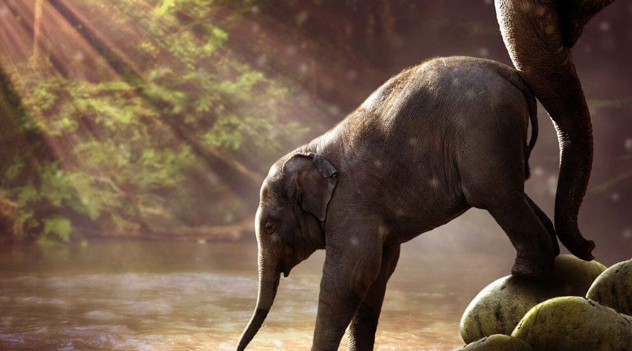 elephant-2380009_1280-תמונה ניר מקובסקי